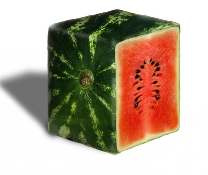 Square watermelons are the fruit of human ingenuity
